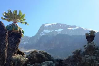 Kilimandżaro - Hakuna Matata!