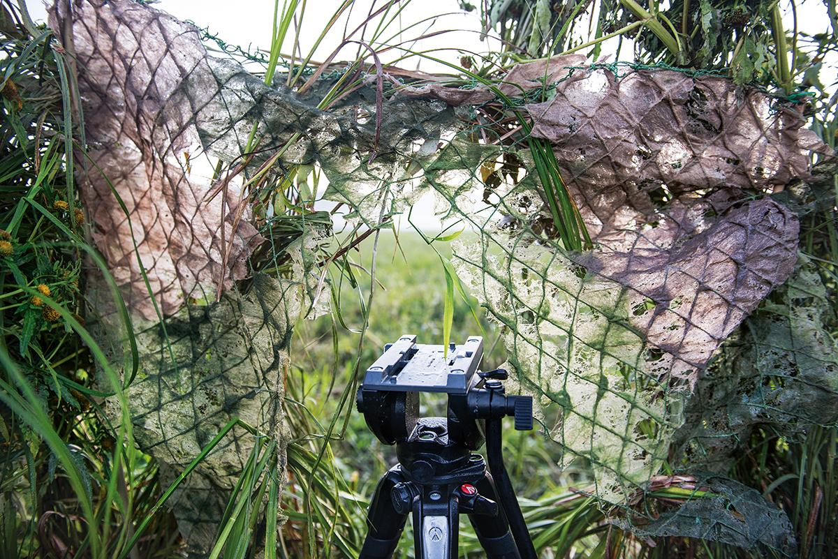 Fotografia przyrodnicza: przygotowanie stanowiska